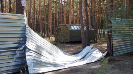 Вырубку в Северном лесу Воронежа приостановят