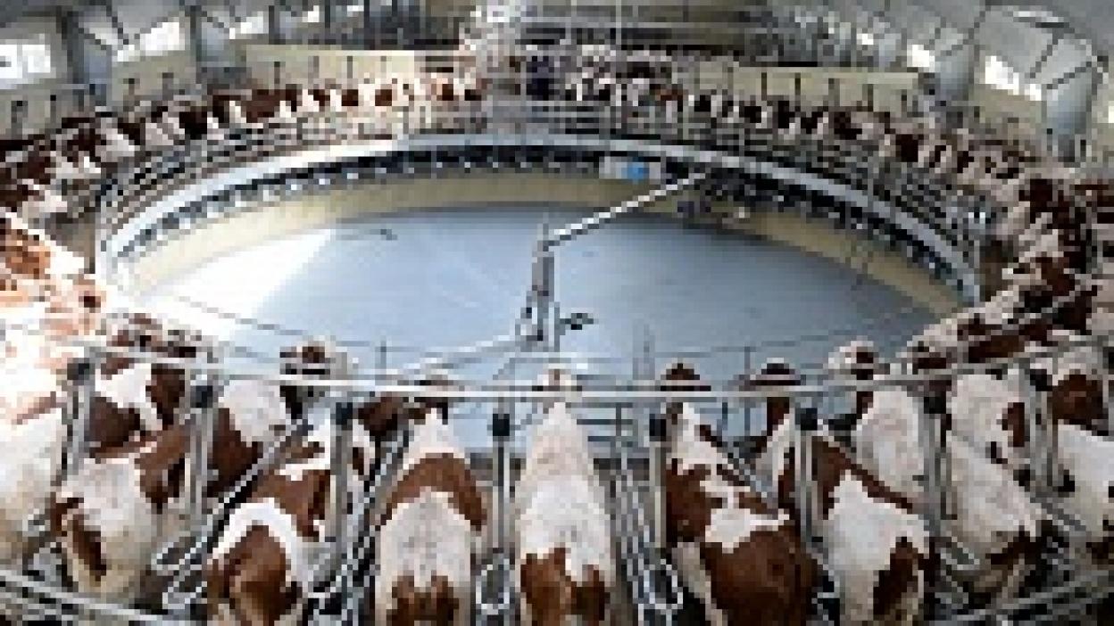 Воронежские власти спроектируют первый молочный кластер России