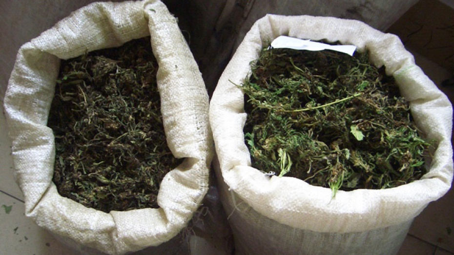 У сельчанина в Воронежской области нашли 0,5 кг конопли