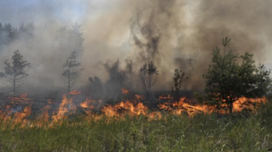 Воронежский микрорайон заволокло дымом из-за полыхавшей сухой травы