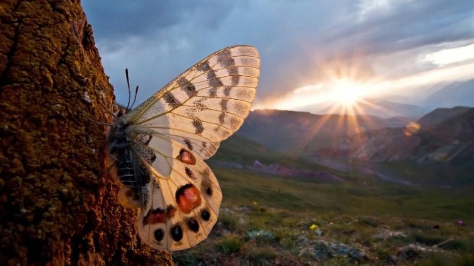 Павловский биолог стал финалистом престижного фотоконкурса