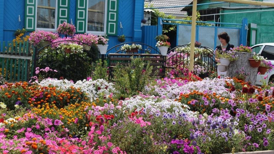 Цветовод-коллекционер из Таловой посадила на своем участке 80 видов цветов