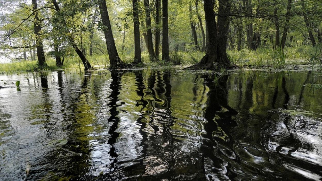 Экология воронежской области доклад 229