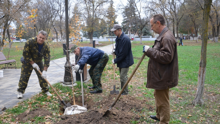В Павловске ко Дню Победы жители высадят 75 лип
