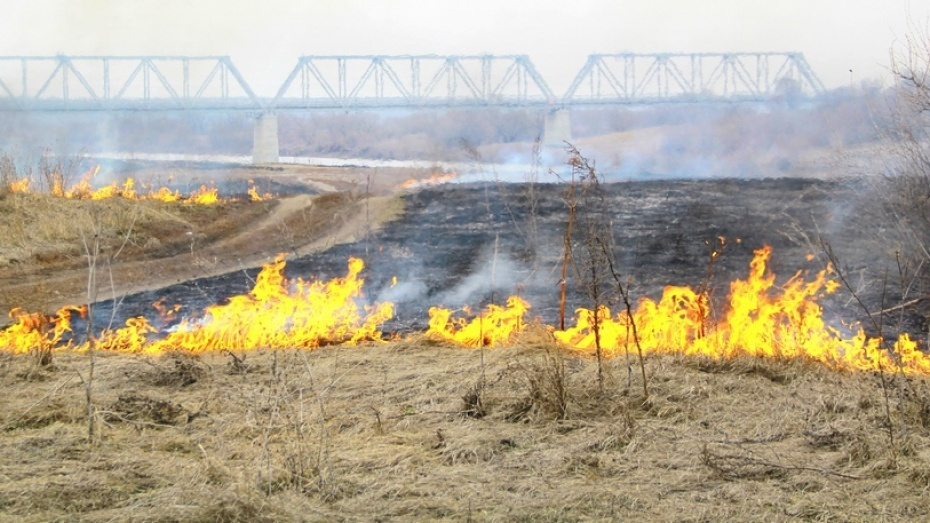 В Воронежской области сгорело 3 га лесной подстилки
