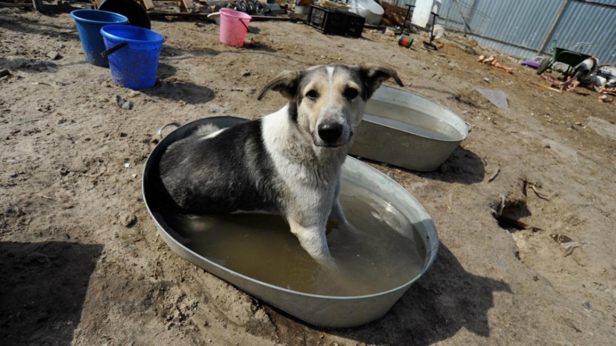 Собачий стационар. Каким будет первый приют для бродячих животных в Воронеже