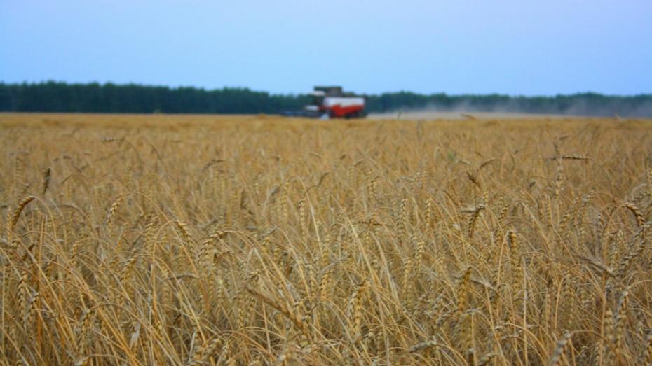 Аграрии Подмосковья намолотили уже свыше 260 тыс тонн зерновых