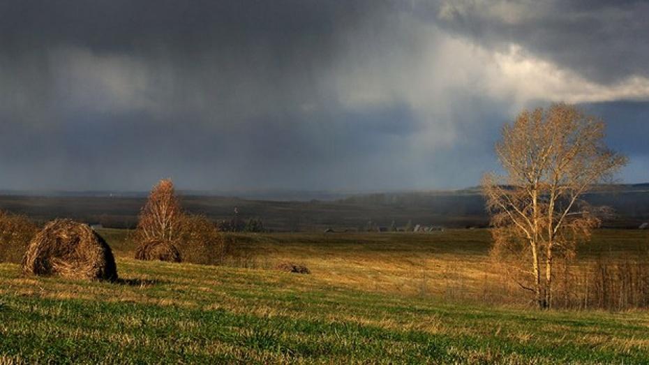 Непогода мешает семилукским аграриям убирать урожай