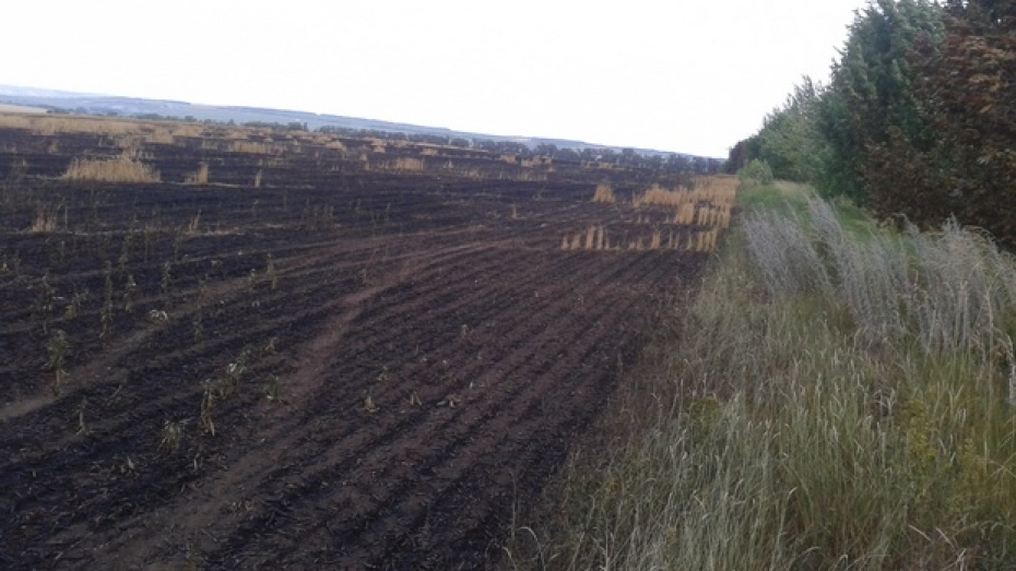 Фермер из Кантемировского района, чье поле уничтожил пожар: «Это был поджог»