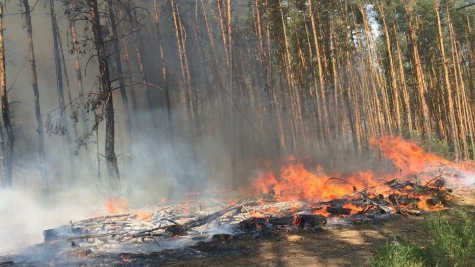 Под Воронежем загорелся лес