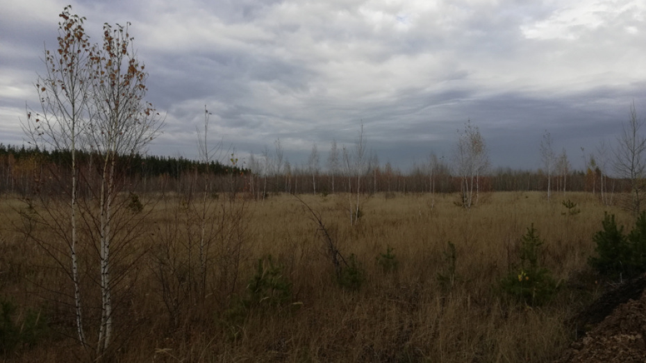 В Воронеже остановили вырубку леса ради расширения песчаного карьера