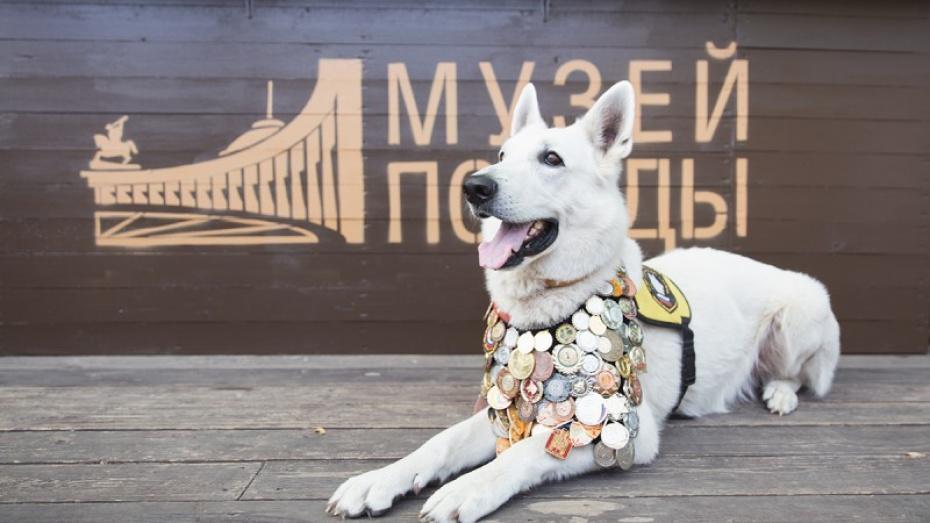 Воронежским школьникам предложили нарисовать портрет фронтовой собаки