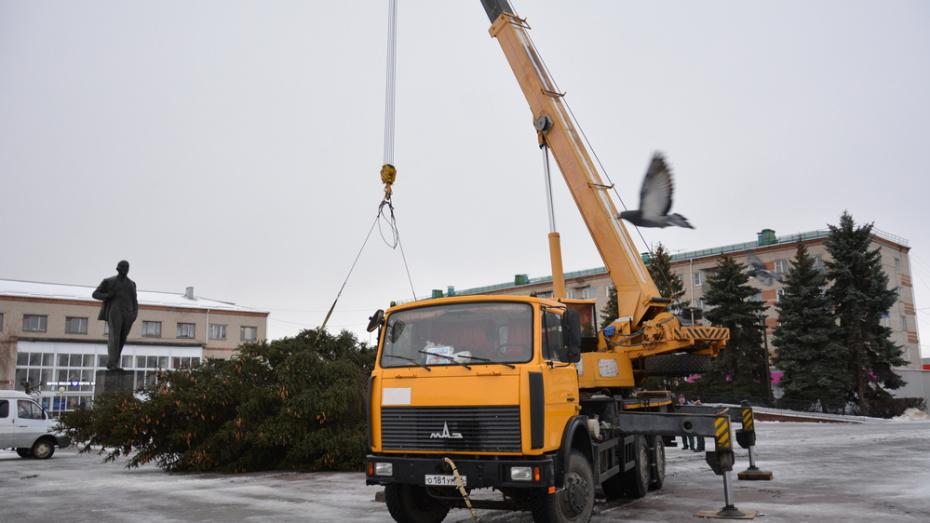 Жительница острогожского села Гнилое подарила землякам новогоднюю 15-метровую ель