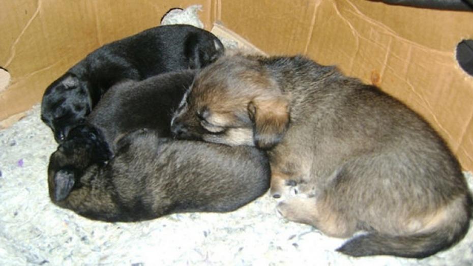 В Павловске спасают осиротевших щенков