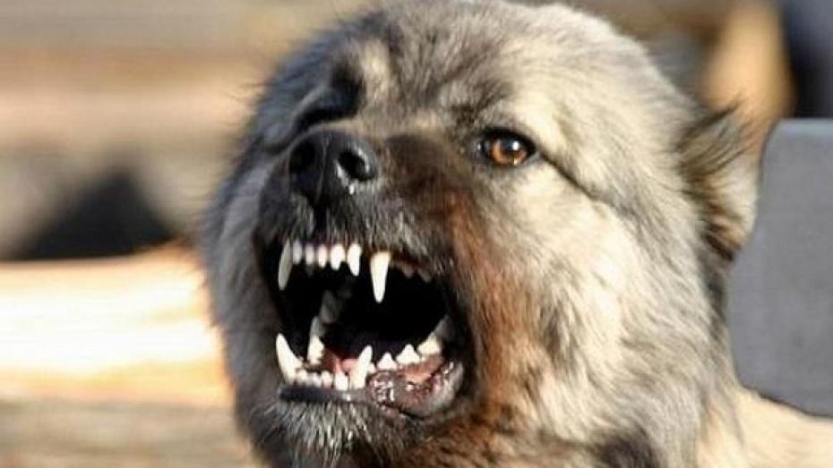 В Подгоренском районе одичавшие собаки нападают на людей