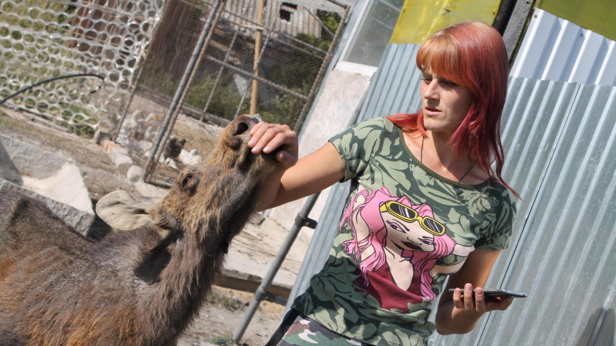 «Продвинутый и современный лось». Как семья из Воронежской области приручила лесного зверя