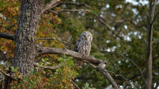 Новый вид сов сфотографировали в Воронежском заповеднике