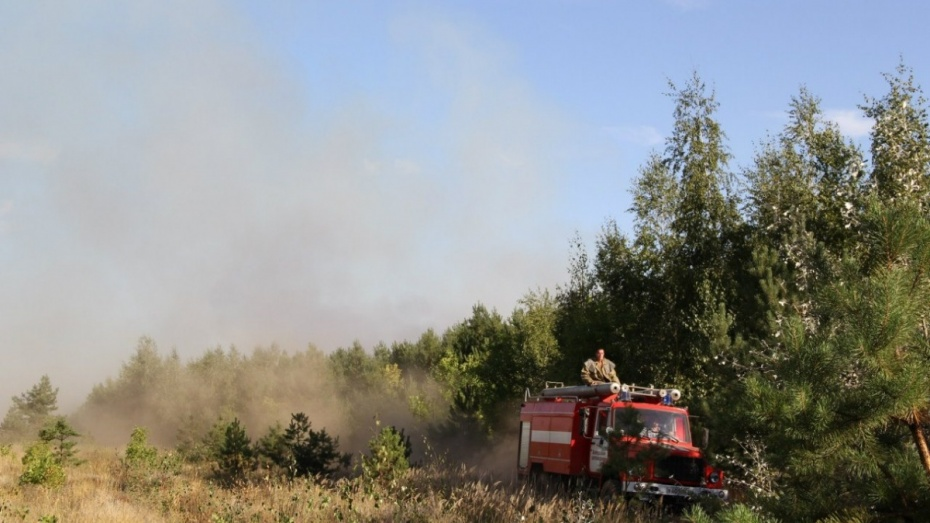На большей части Воронежской области установился высокий класс пожароопасности