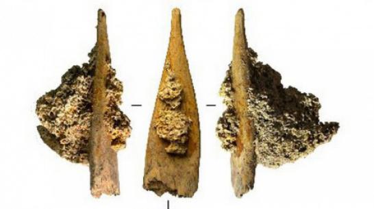 Под Воронежем обнаружили ребро мамонта с застрявшим в нем костяным наконечником