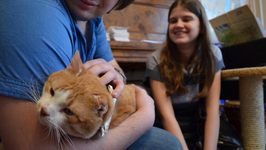 Воронежцы подарили бездомным кошкам машину подарков