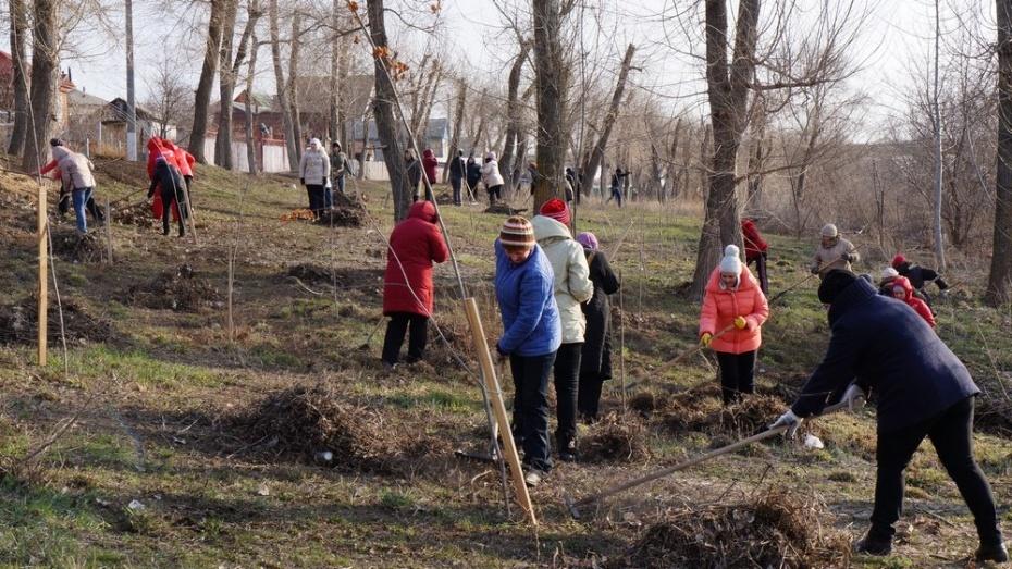 В осеннем субботнике приняли участие 119 тыс жителей Воронежской области