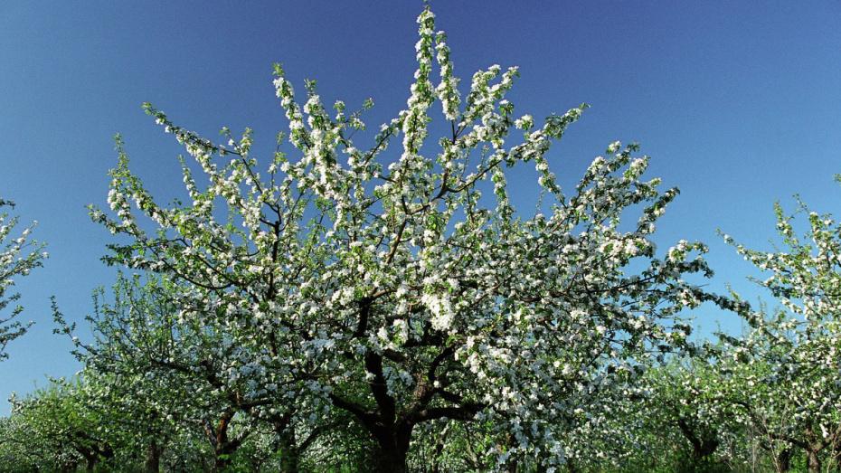 Строительство «социального узла» на месте яблоневого сада обсудят с воронежцами