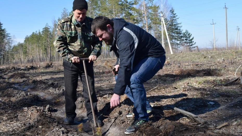 Главгосстройнадзор готов ксубботней акции «Наш Лес. Посади свое дерево»