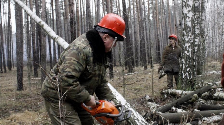 Санитарные рубки воронежских лесов подошли к завершению