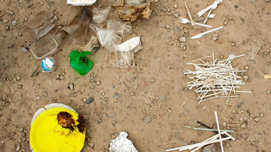 В Воронеже добровольцы очистят от пластикового мусора дикий пляж в Отрожке