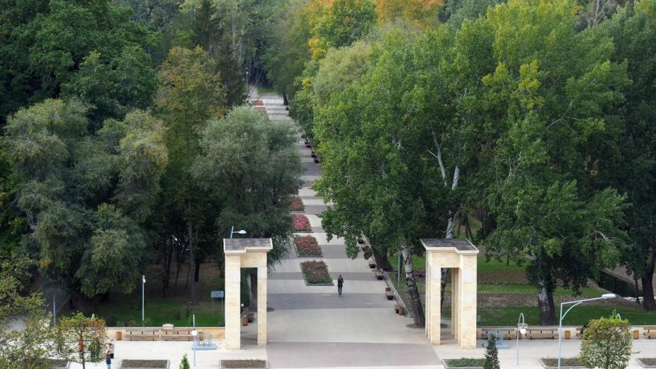 Воронежцы предложили создать летнюю горку в Центральном парке