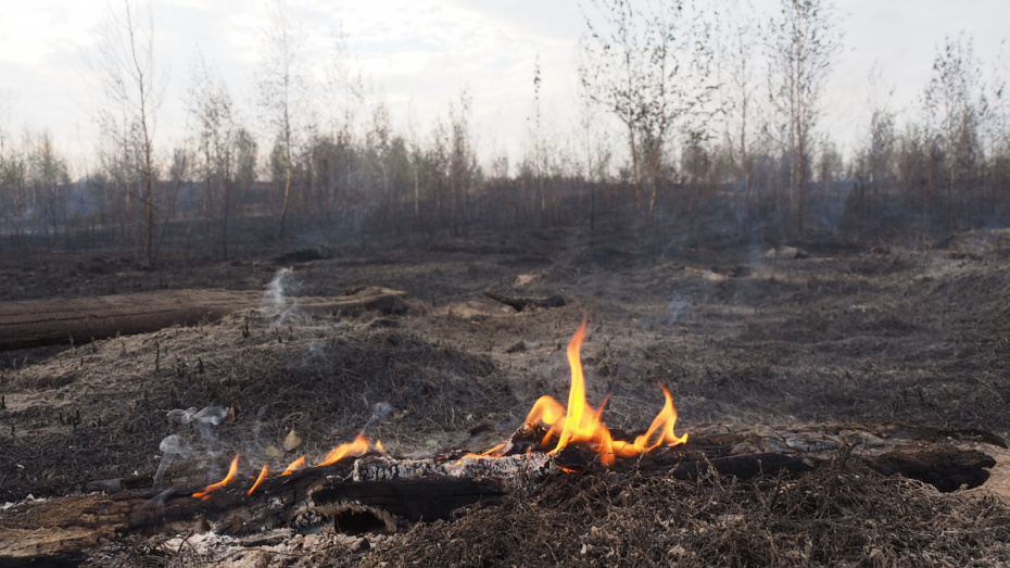 Пожар случился в яблоневом саду в Воронеже