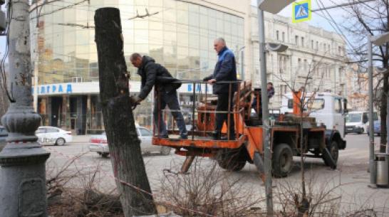 На проспекте Революции в Воронеже начали спиливать аварийные деревья