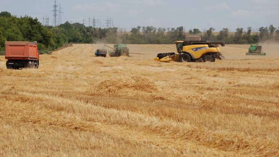 Россошанские аграрии завершили уборку озимой пшеницы