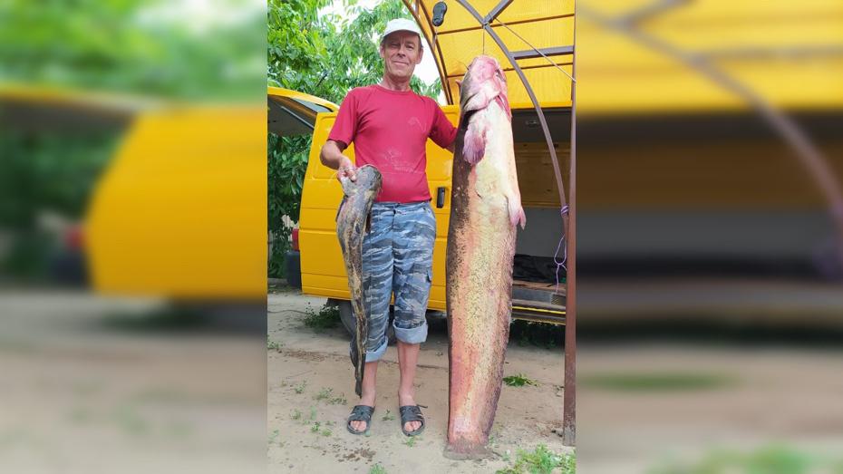 Житель Воронежской области поймал 40-килограммового сома