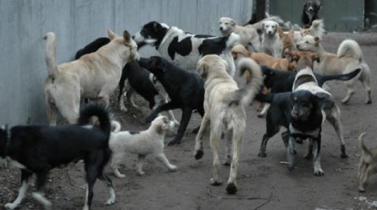 После нападения животных в январе к врачам обратились 527 жителей Воронежской области