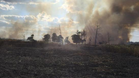 В Боброве в пойме реки Битюг выгорело около 1 га травы и камыша