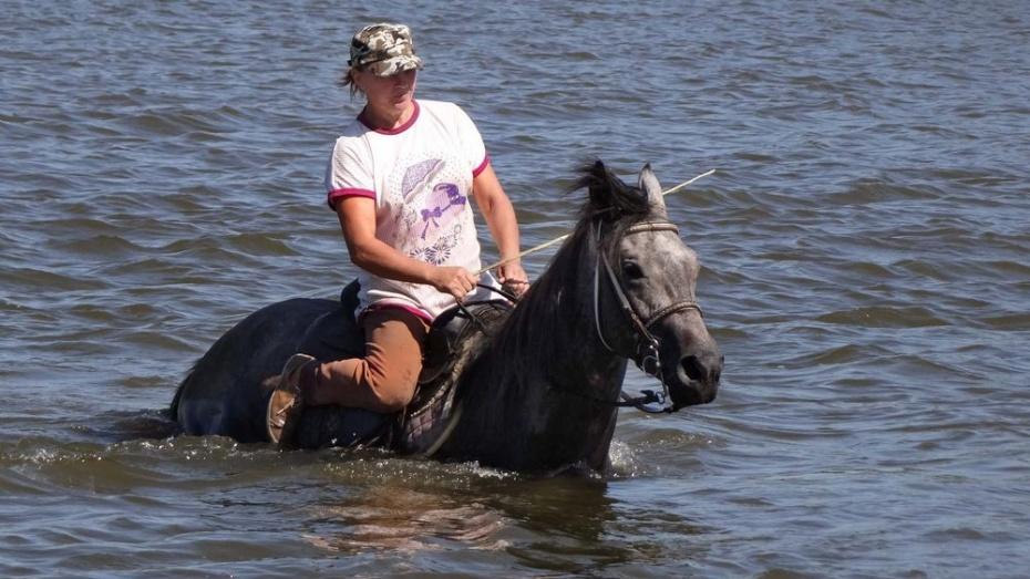Семилукские полицейские вернули хозяйке пропавшего 3 года назад коня