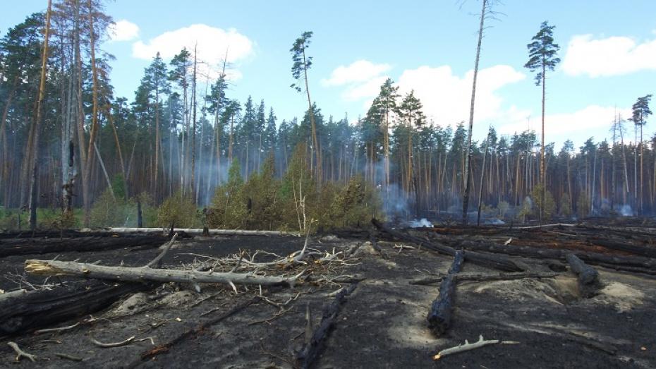 Ущерб от пожара в Воронежском заповеднике оценили в 6,5 млн рублей