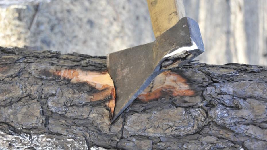 В Борисоглебском районе задержан «черный лесоруб»
