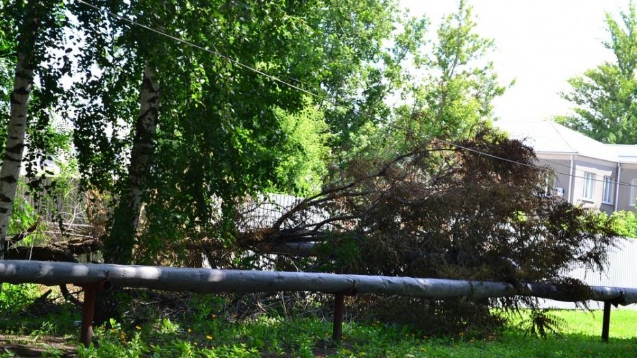В Грибановском районе ураган поломал тополя и порвал линии электропередач