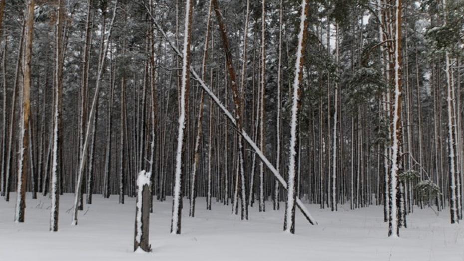 В Бобровском районе вор с награбленным добром заблудился в лесу