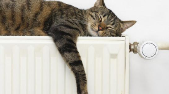 В Борисоглебске включили отопление