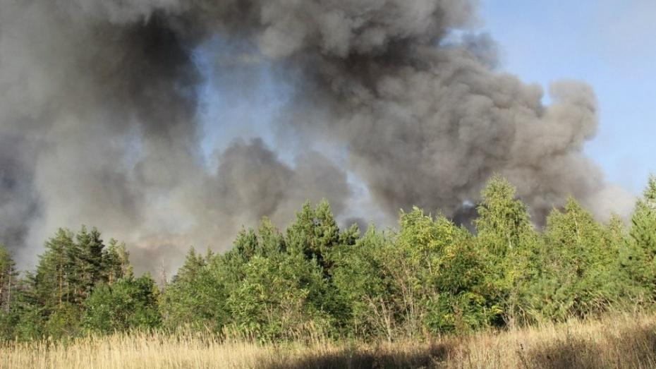 Под Рамонью неизвестные провоцировали ландшафтный пожар