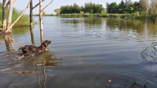 В Воронежской области пройдут всероссийские соревнования дратхааров