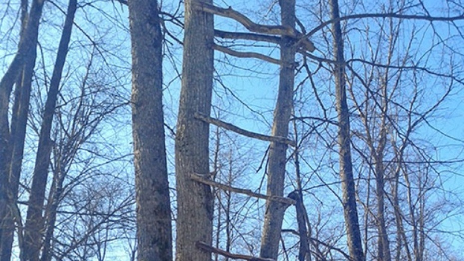 В Воронежском заповеднике браконьера сняли с дерева