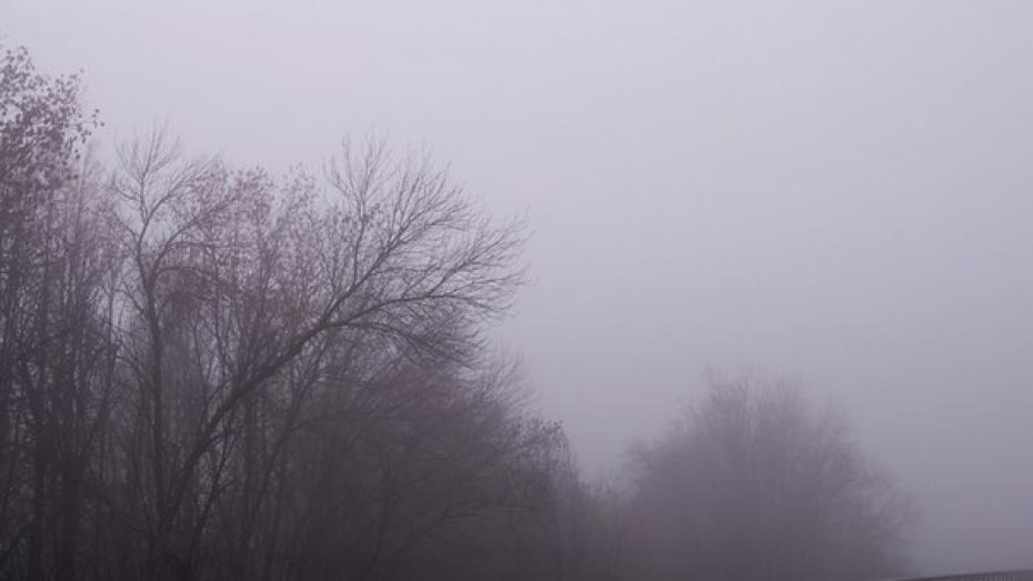 Гидрометцентр РФ объявил желтый уровень в Воронежской области из-за тумана в ночь на 6 мая