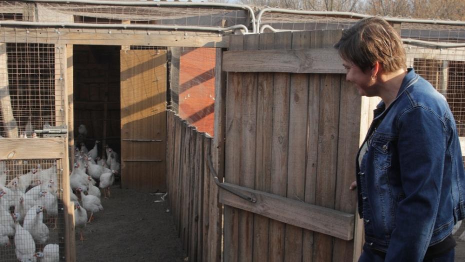 Супруги из бобровского села Верхний Икорец занялись разведением цесарок
