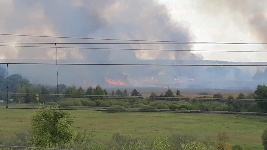 Черный дым ландшафтного пожара напугал жителей Воронежской области