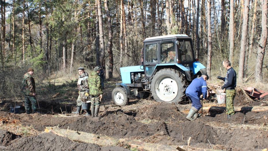 В Ольховатском районе высадят более 9 тыс сеянцев лиственных деревьев