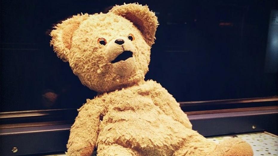 Забытый в поезде плюшевый медвежонок вернулся к хозяину, благодаря соцсетям